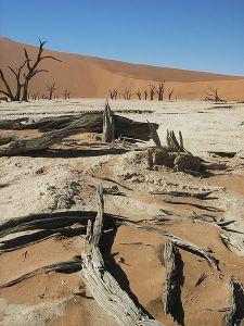 sdead landscape